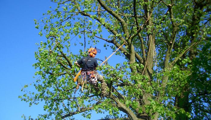 Baumpflege rheinwald